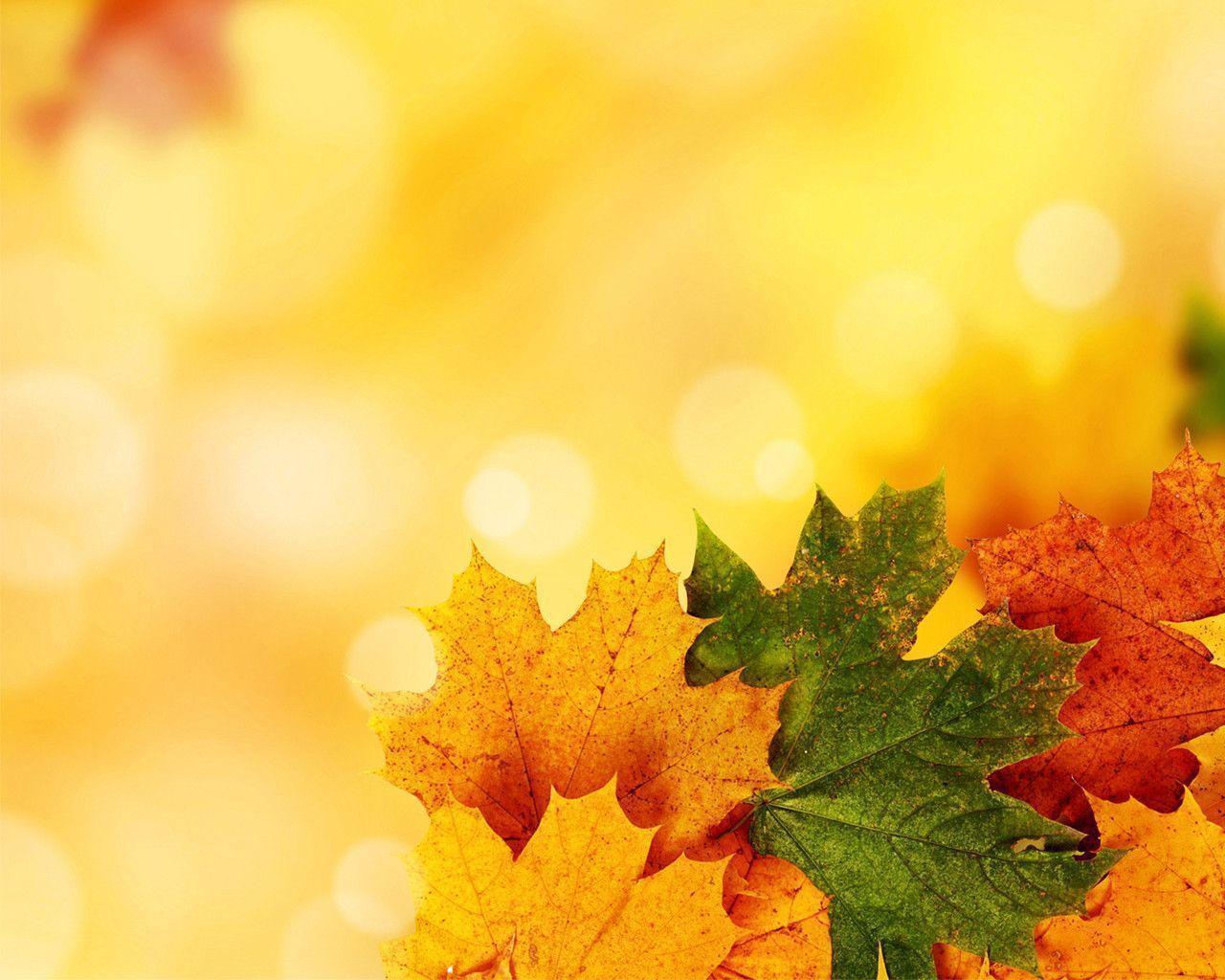 autumn ppt template