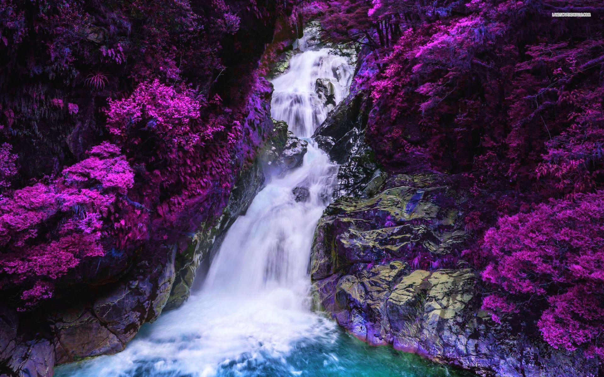 Free Fall Flowers Desktop Wallpaper Purple Tree Wallpapers Wallpaper Cave
