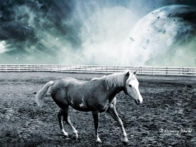 Cool Horse Backgrounds - Wallpaper Cave