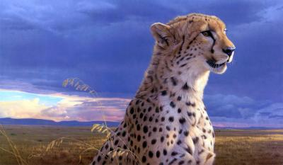 Cheetah Wallpapers HD - Wallpaper Cave
