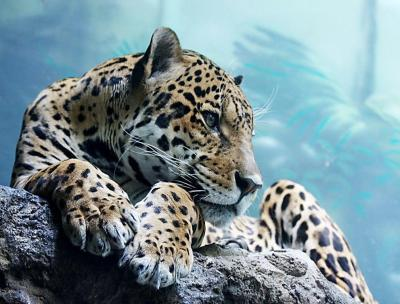 Cool Animal Wallpapers - Wallpaper Cave