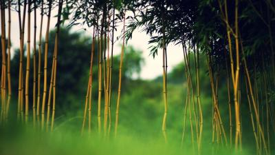 Bamboo Desktop Wallpapers - Wallpaper Cave