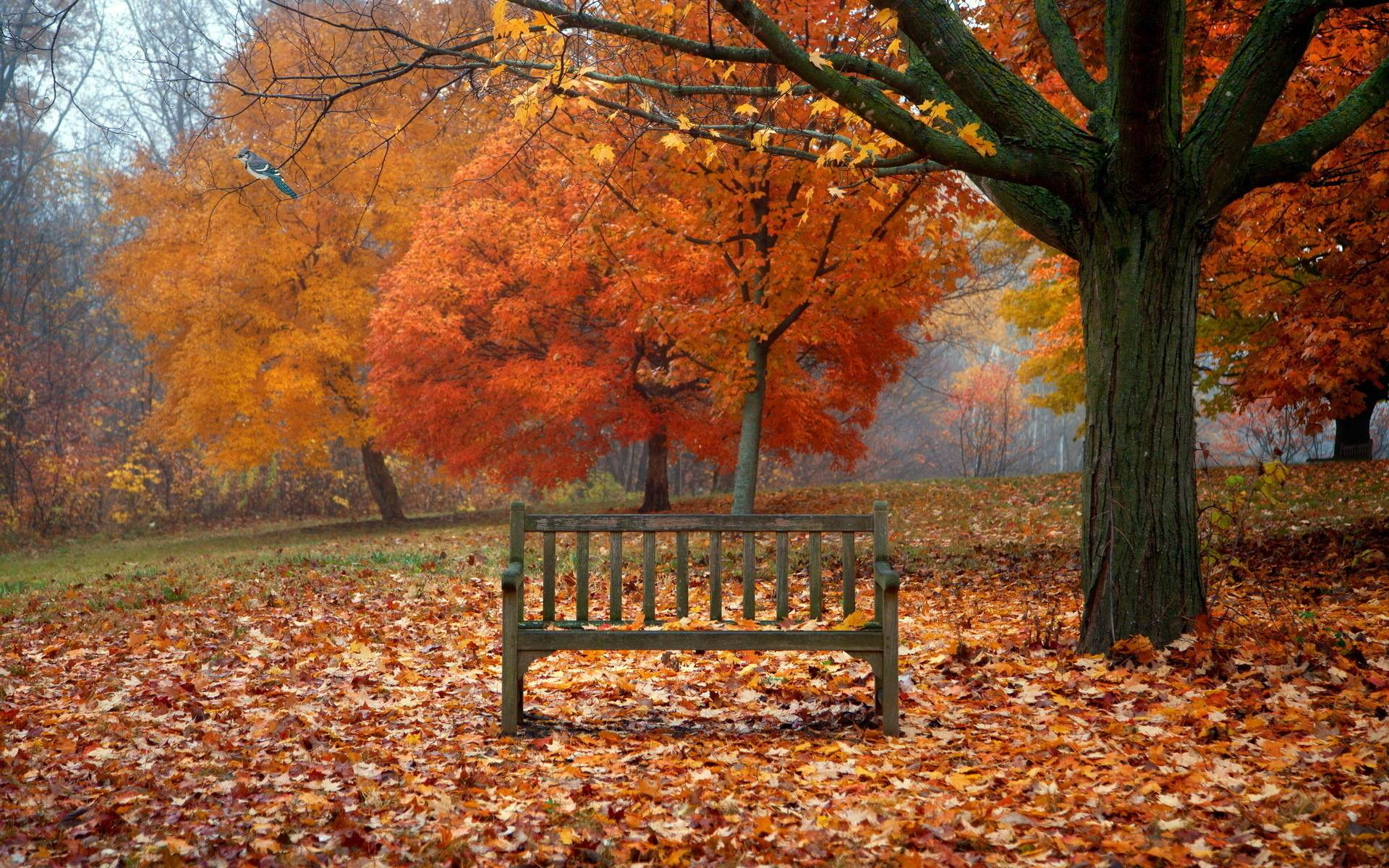 Free Fall Wallpaper For Android Free Desktop Wallpapers Fall Scenes Wallpaper Cave