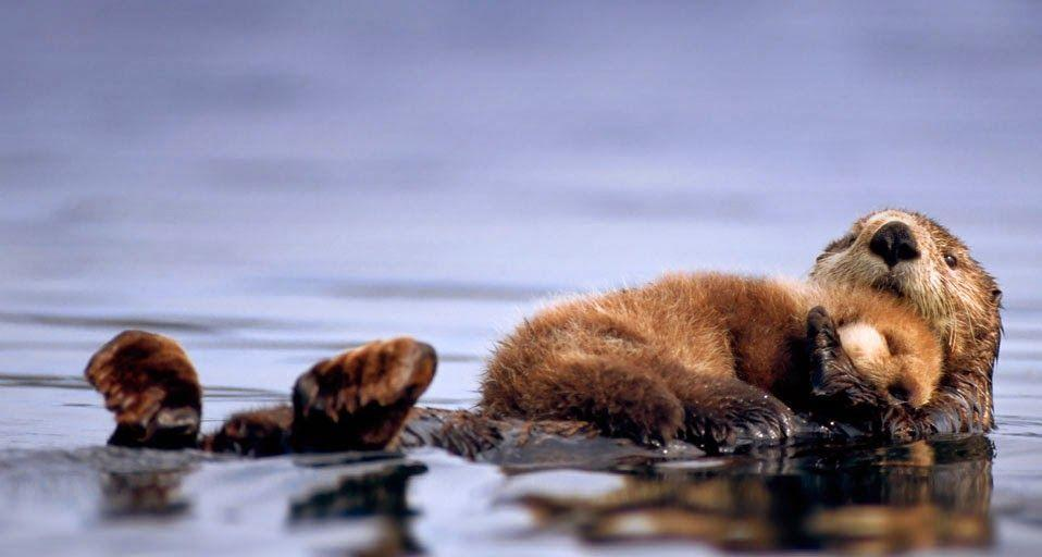 Cute Couple Holding Hands Wallpapers Sea Otter Wallpapers Wallpaper Cave