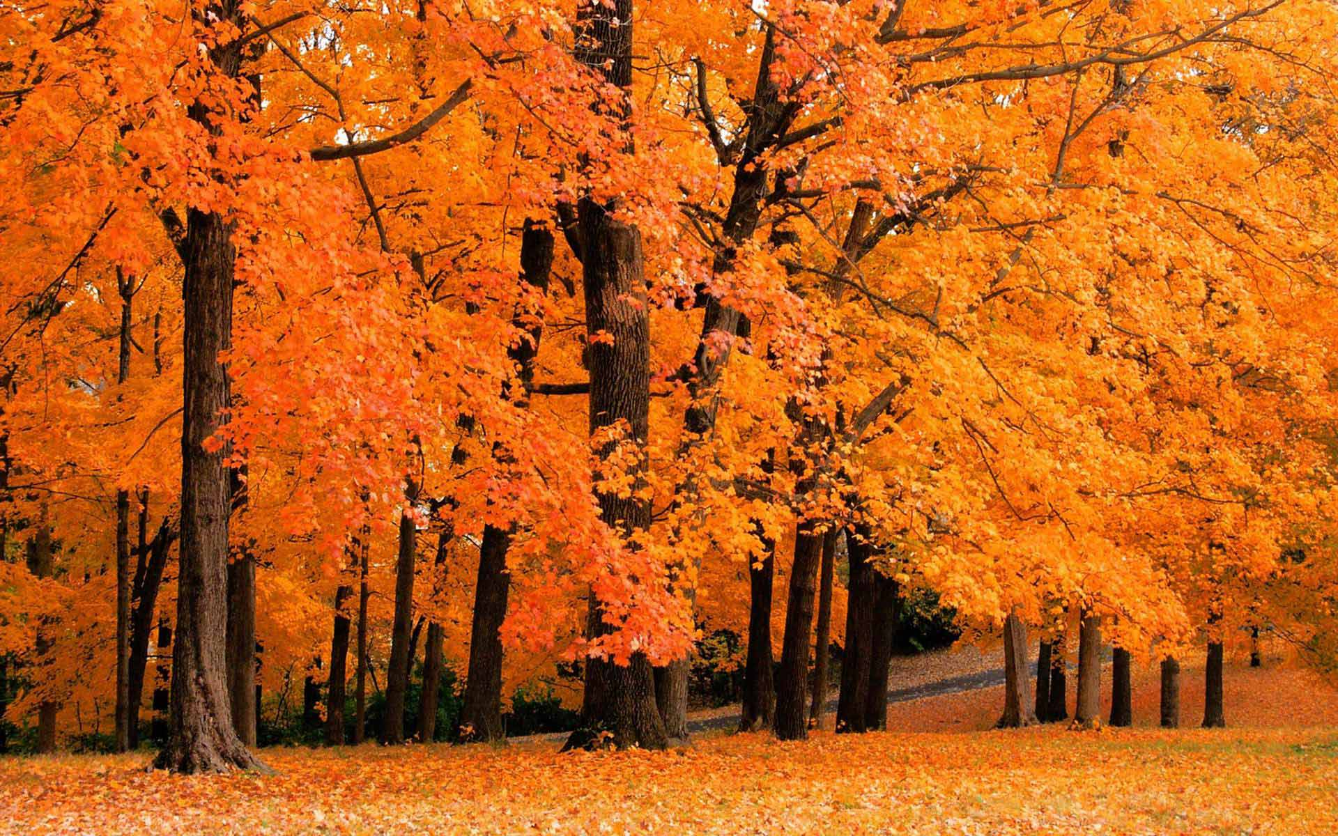 Upstate New York Fall Hd Wallpaper Fall Foliage Wallpapers For Desktop Wallpaper Cave