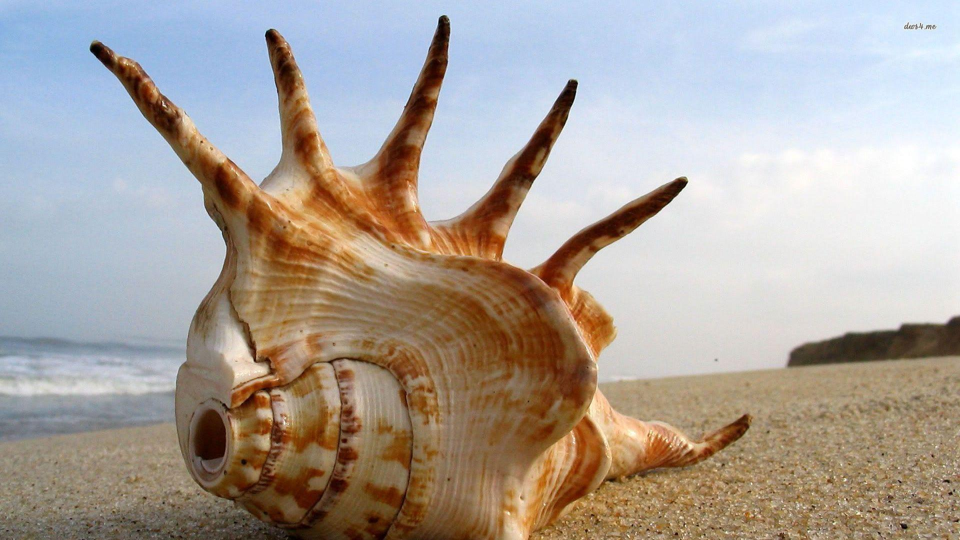 Geography Hd Wallpaper Seashell Wallpapers Wallpaper Cave