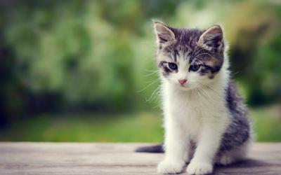Cute Kittens Wallpapers - Wallpaper Cave