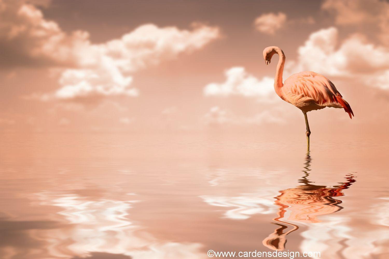 Watercolor Wallpaper Backgrounds Quote Flamingo Wallpapers Wallpaper Cave