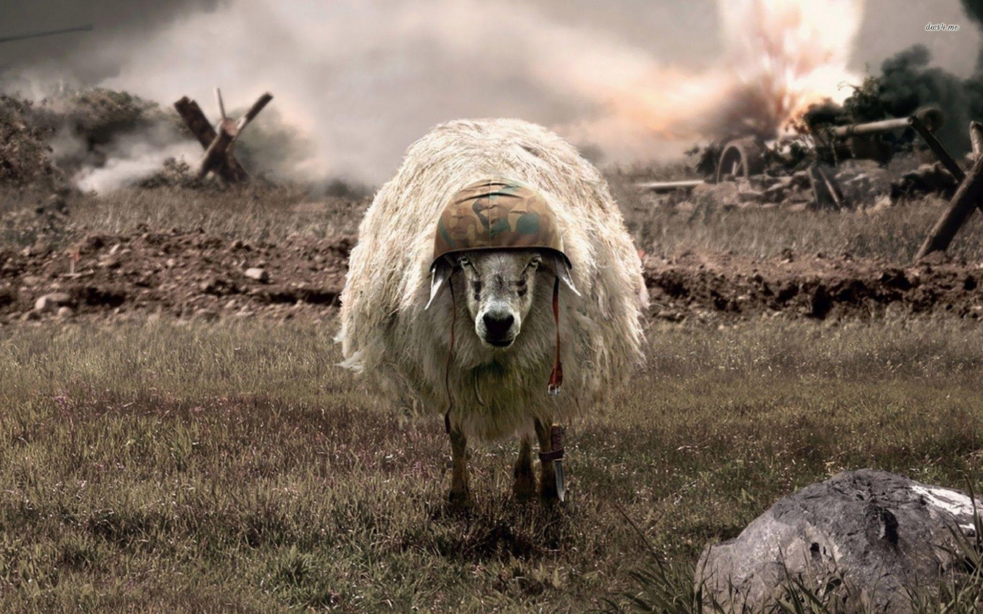 Awsome Cute Skull Wallpapers Sheep Wallpapers Wallpaper Cave