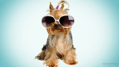 Cool Dog Backgrounds - Wallpaper Cave