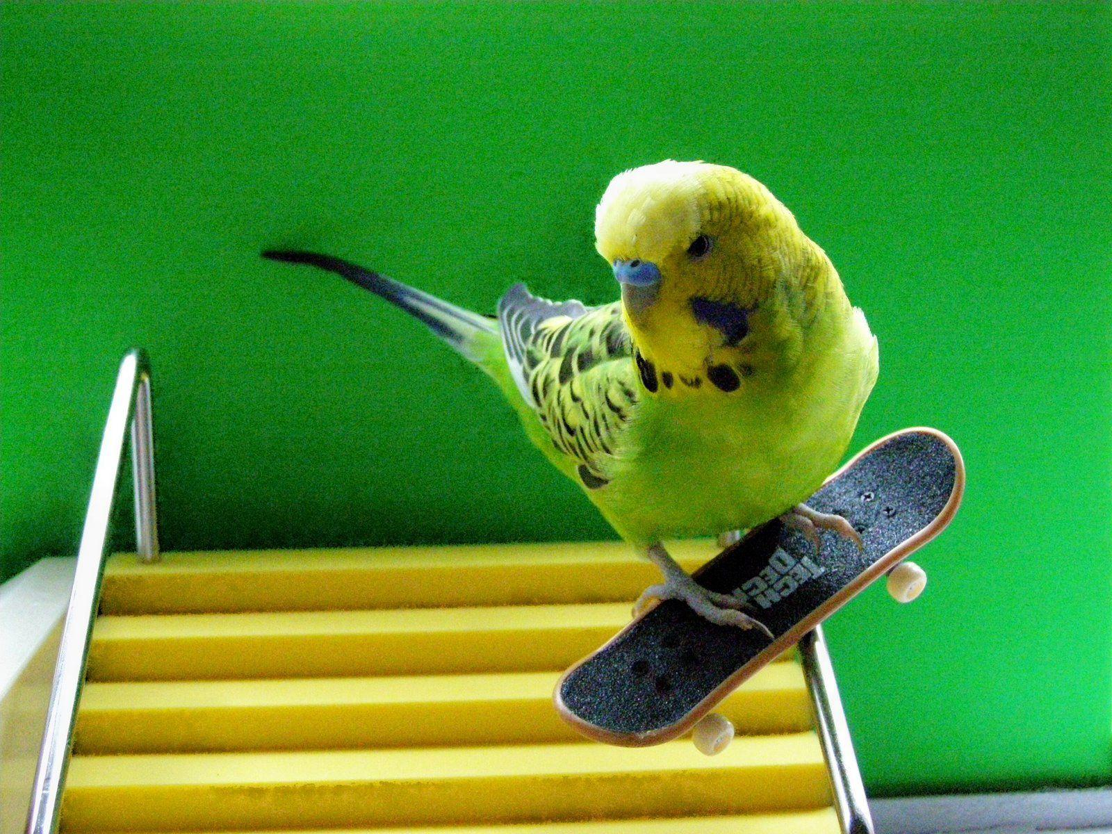 Cute Parakeet Wallpaper Parakeet Wallpapers Wallpaper Cave
