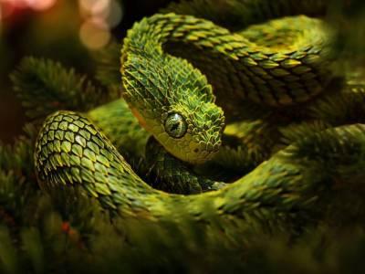 Viper Snake Wallpapers - Wallpaper Cave