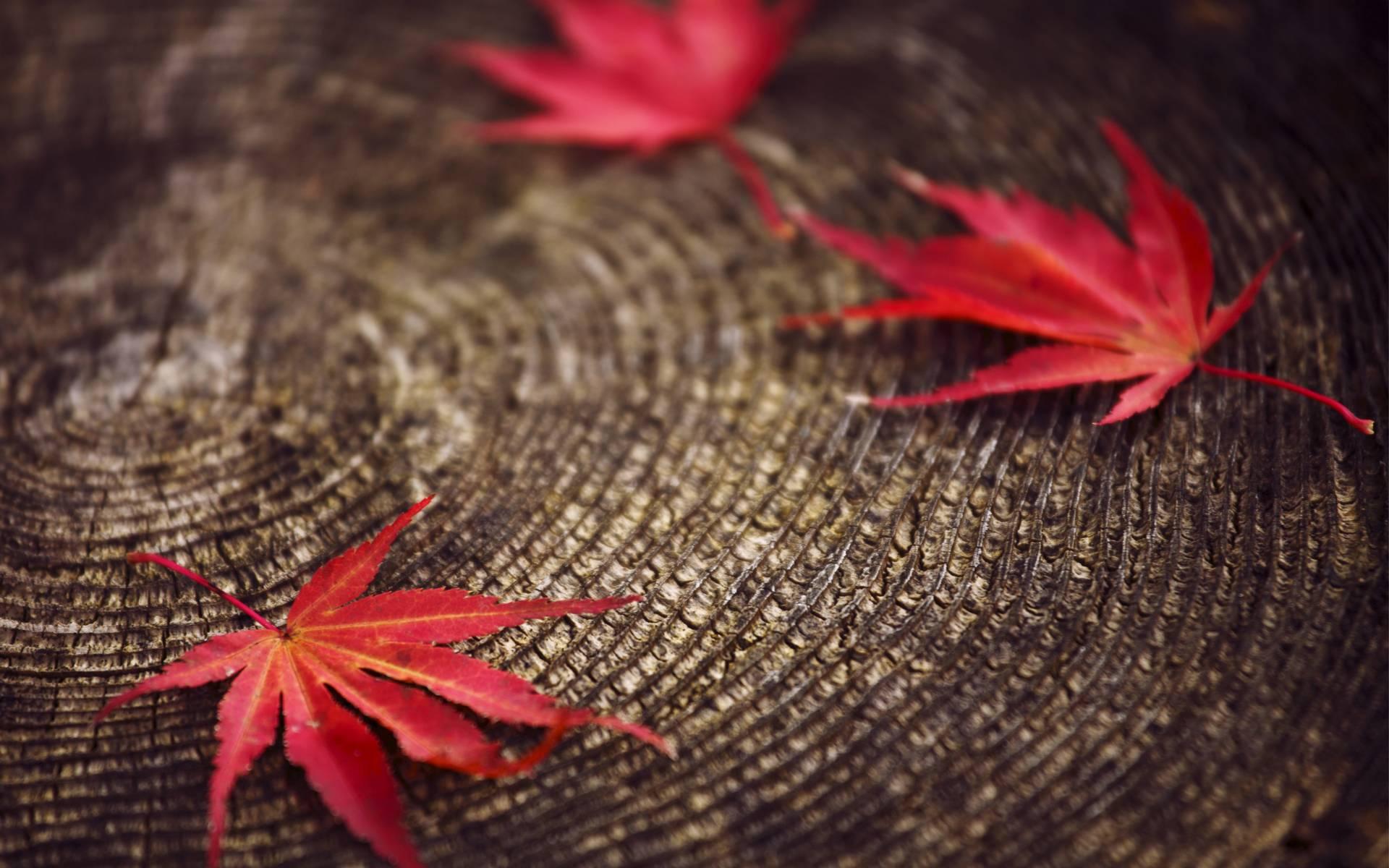 Seasonal Fall Coffee Desktop Wallpaper Red Leaves Wallpapers Wallpaper Cave