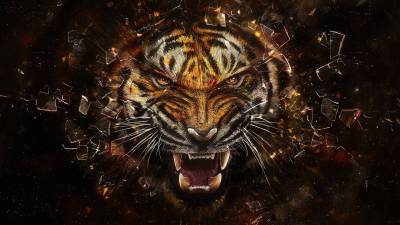 Cool Animal Backgrounds - Wallpaper Cave