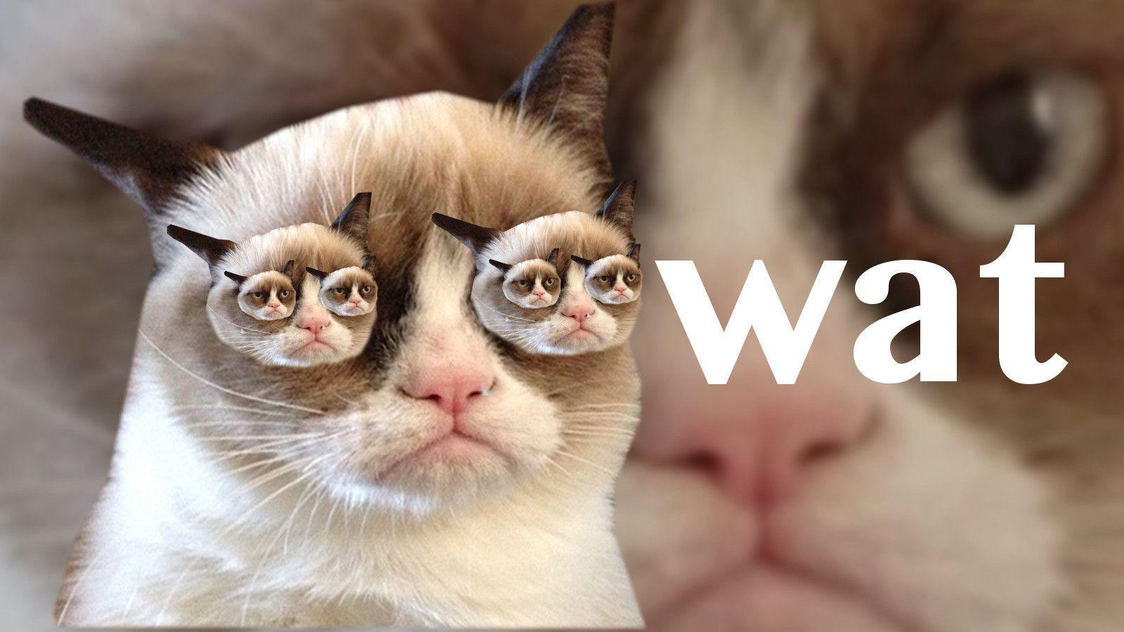 Grumpy Cat Wallpaper Quotes Grumpy Cat Wallpapers Wallpaper Cave