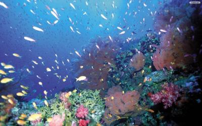 Under The Sea Wallpapers - Wallpaper Cave