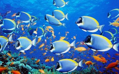 Fish Tank Wallpapers - Wallpaper Cave