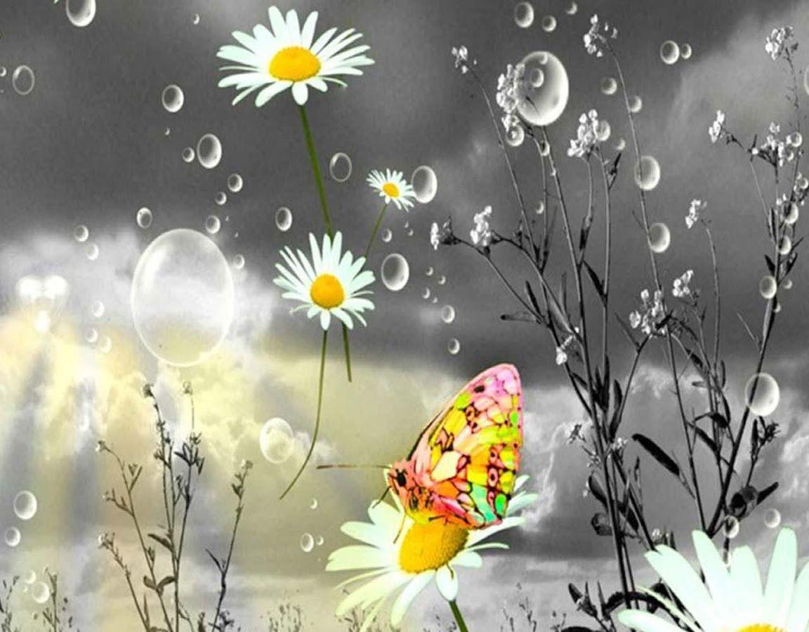 Raindrops Falling On Flowers Wallpaper Rain Drop Wallpapers Wallpaper Cave