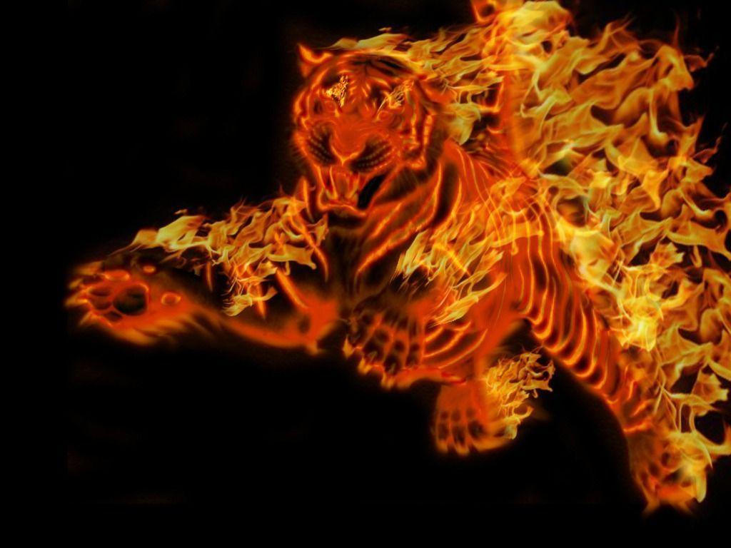 Nature Full Hd 3d Wallpapers 1920x1080 Cool Tiger Backgrounds Wallpaper Cave