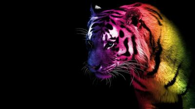 Cool Tiger Backgrounds - Wallpaper Cave