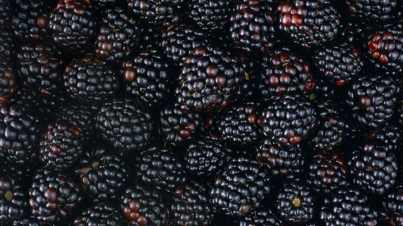 Hd Wallpapers 1080p Nature Animated Tasty Blackberries Hd Wallpaper Wallpaperfx