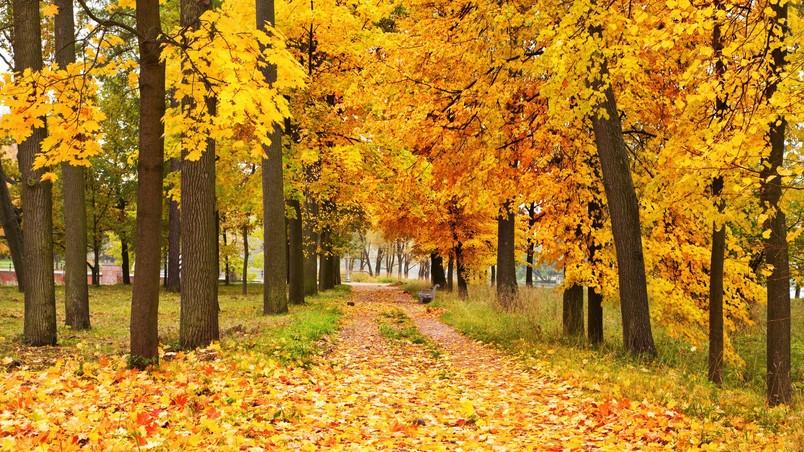 Hd Wallpaper Texture Fall Harvest Yellow Forest Landscape Hd Wallpaper Wallpaperfx