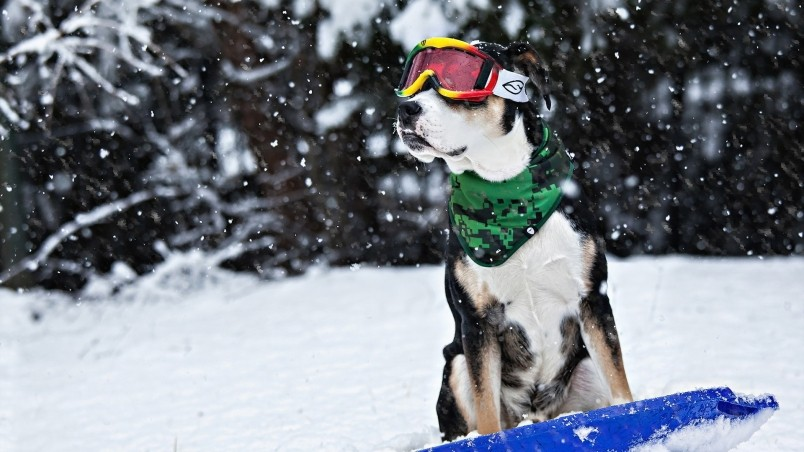 High Quality 3d Animated Video Wallpapers Cool Dog In Snow Hd Wallpaper Wallpaperfx