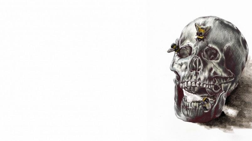 Free 3d Skull Wallpaper Human Skull Drawing Hd Wallpaper Wallpaperfx
