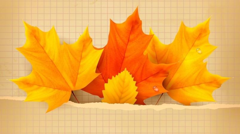 Maple Leaf Wallpaper For Fall Season 3 Beautiful Autumn Leaves Hd Wallpaper Wallpaperfx