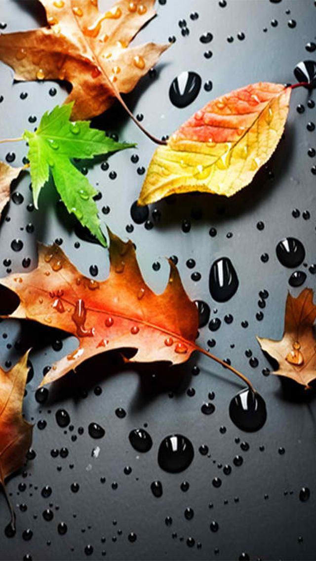 Fall Wallpaper For Cell Phone Zedge Wallpapers