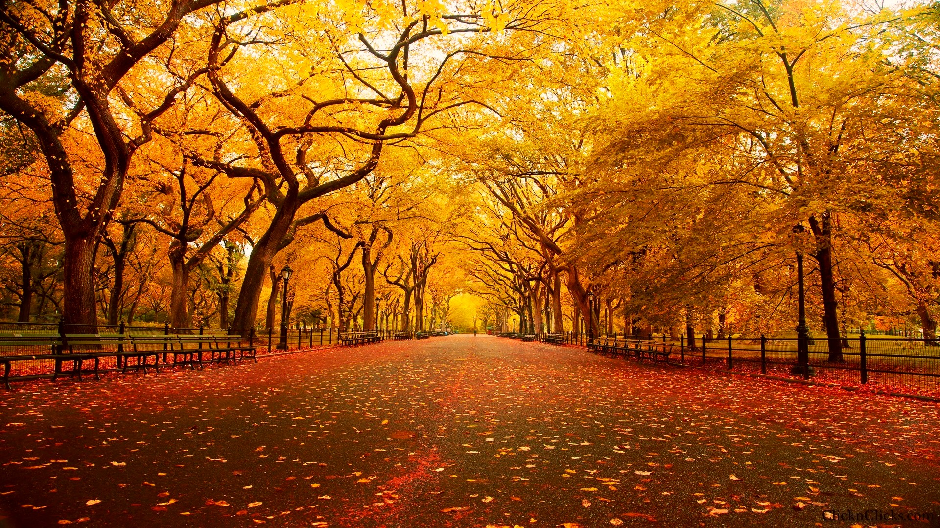 Fall Android Wallpaper Fall Wallpaper 4k Iphone Pc Android Mac Download Download Free