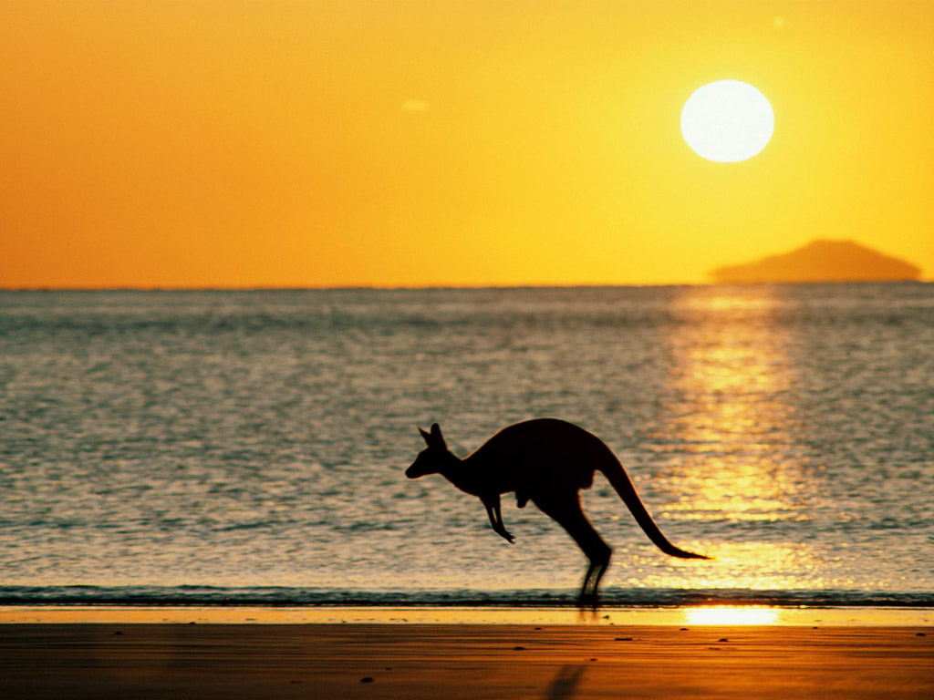 Baby Musical Mobile Australia Kangaroo On Beach Wallpaper Hd Wallpaper Wallpaperlepi
