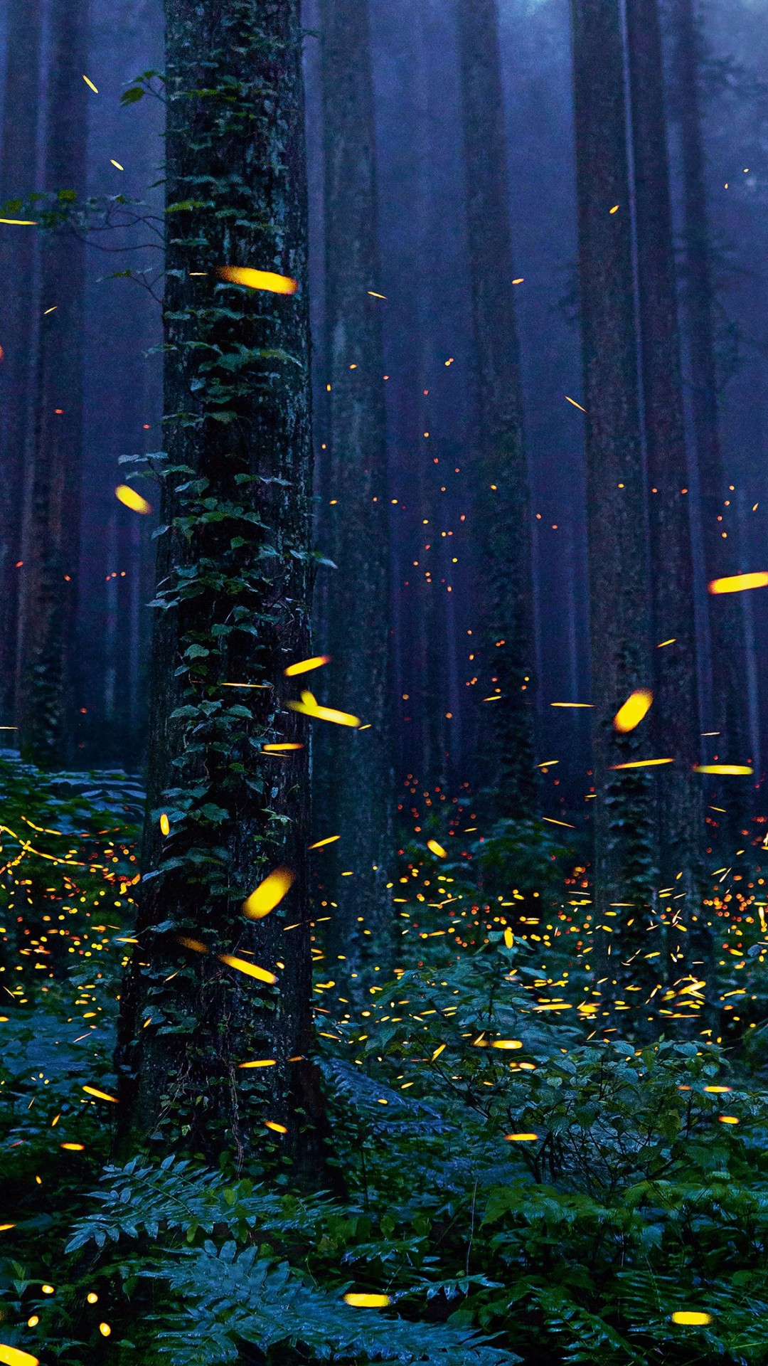 Download 1080x1920 Forest Fireflies Trees Night