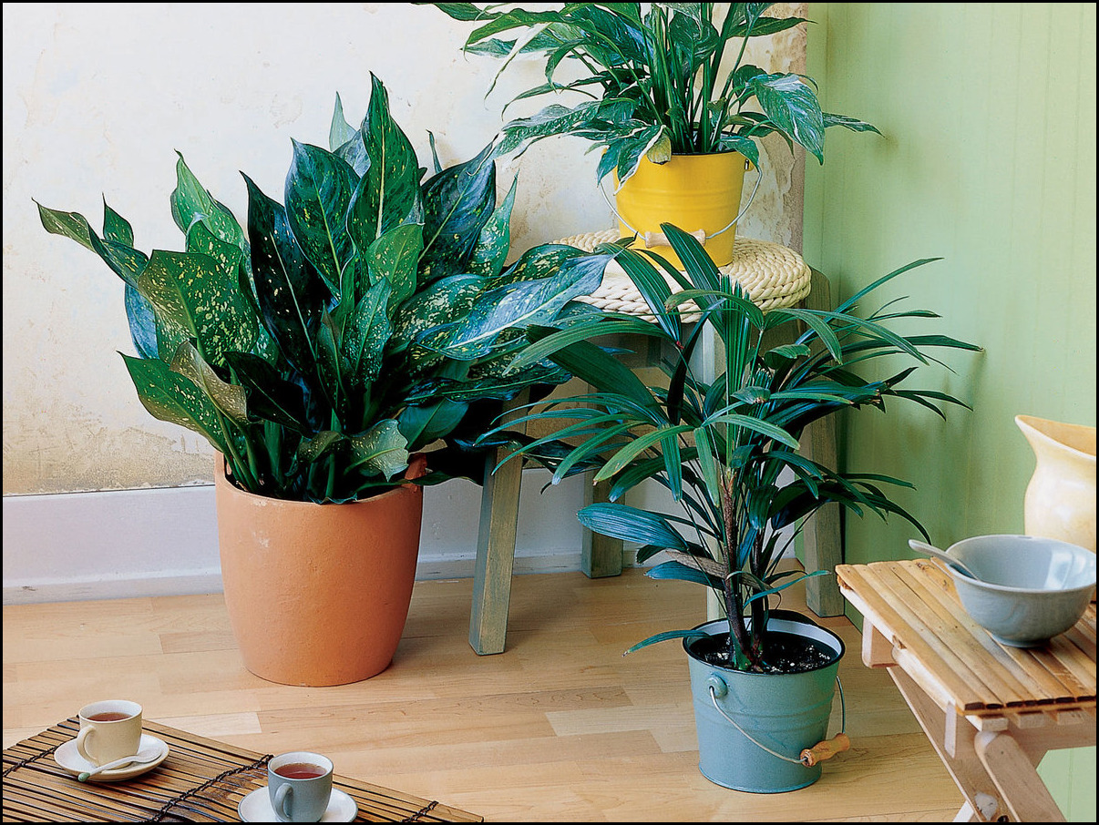 Easy To Care For Houseplants 14 Houseplants For Individuals With No Inexperienced Thumb