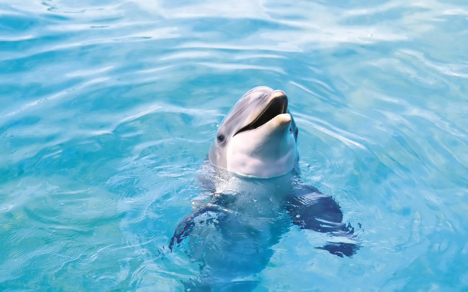 Small Girl Wallpaper Full Hd Cute Dolphin Wallpaper Beautiful