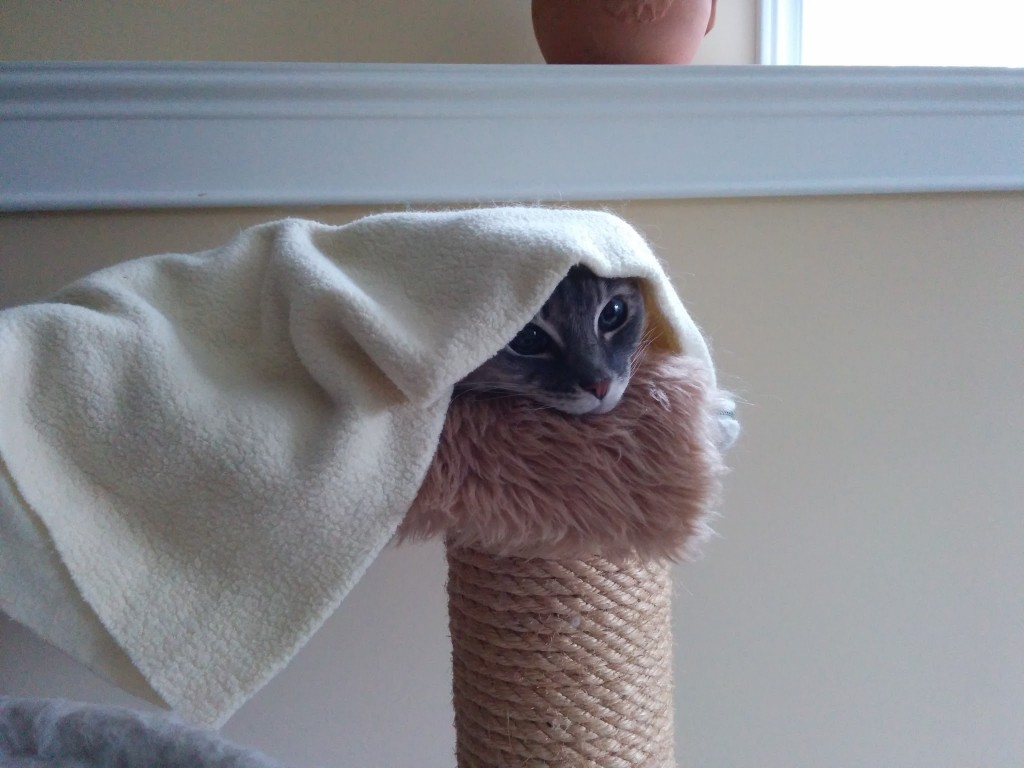 Little Girl Wallpaper Free Download Cat In Hammock Hiding Under Blanket Animal