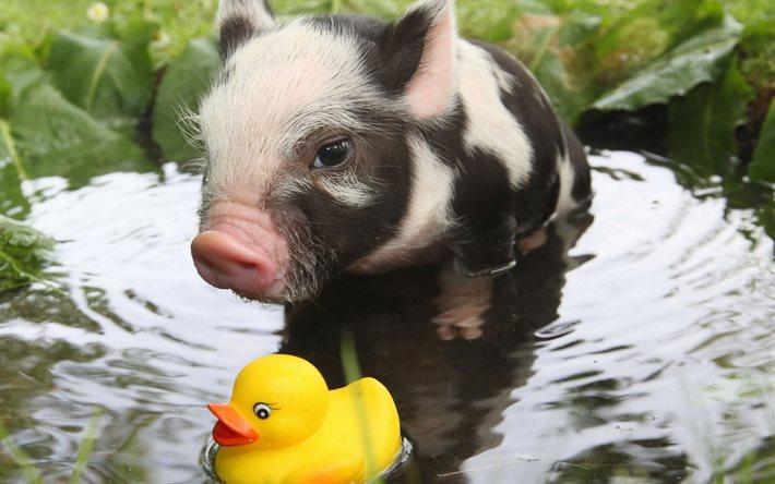 Cute Duck Hd Wallpaper T 233 L 233 Charger Fonds D 233 Cran Petit Cochon Des Animaux