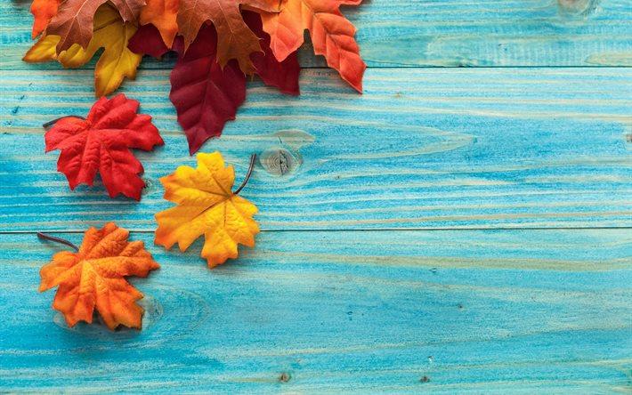 Fall Leaves Falling Wallpaper Scarica Sfondi Acero Foglie Consiglio Autunno Per