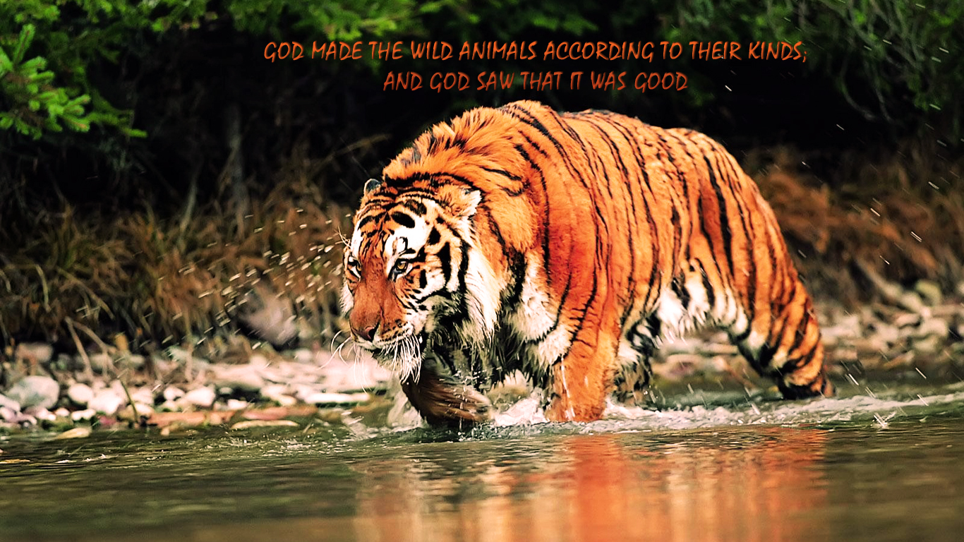 All Animals Hd Wallpapers Wild Christian Wallpapers