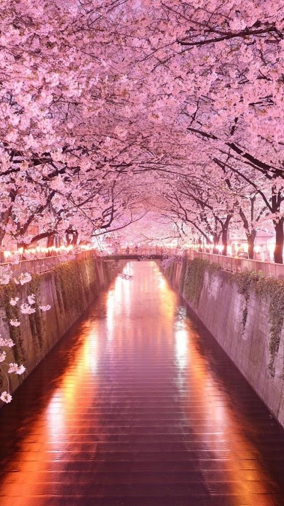 Cute Pink Wallpaper For Phone Pink Flower Iphone Wallpaper Hd 2018 Cute Screensavers