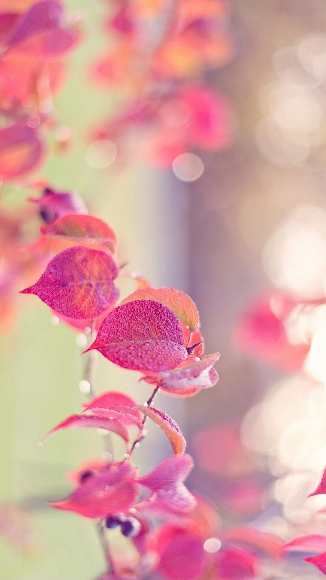 Leaf Wallpaper Quote Mac Pink Wallpaper Iphone Hd 2019 Cute Wallpapers