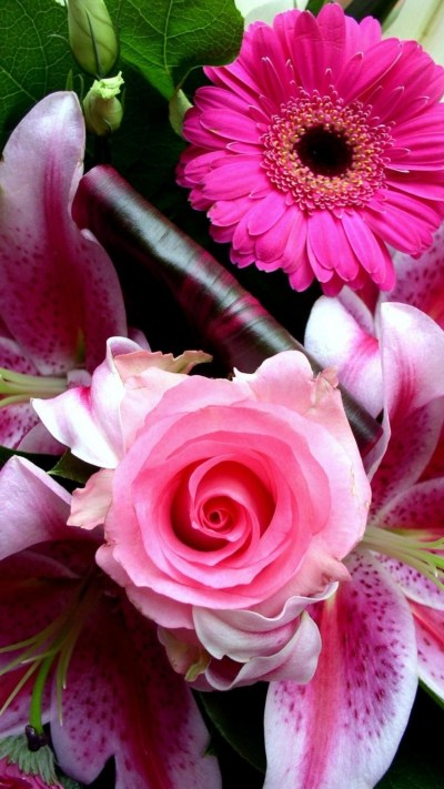 iPhone Wallpaper HD Pink Flower | 2019 Cute Wallpapers