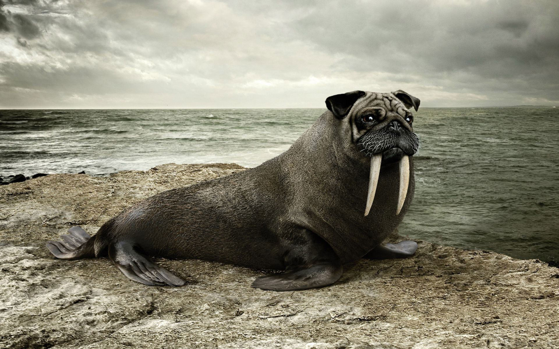 Creative Hd Wallpapers Free Download Sea Lion Hd Wallpapers