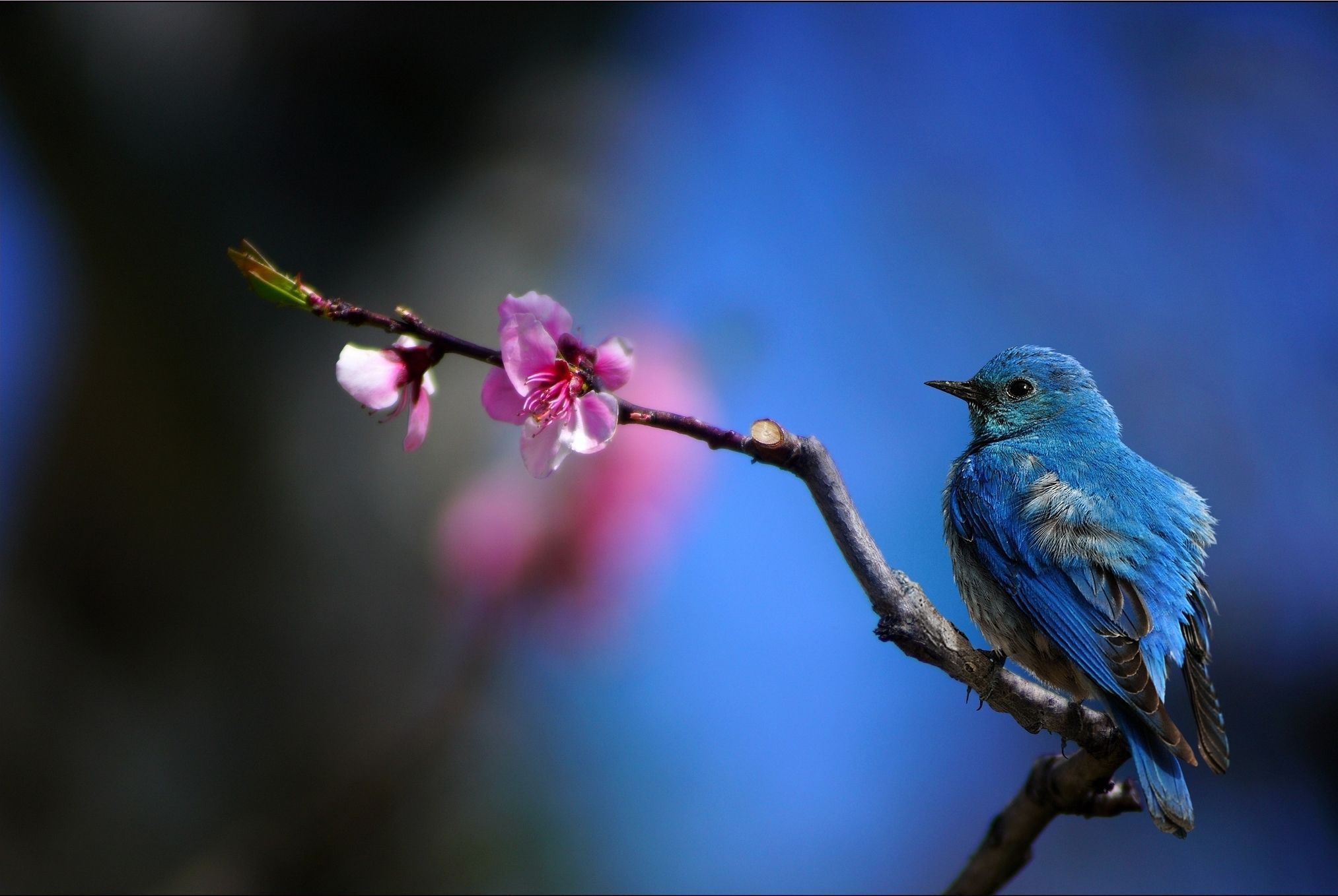 Completely Girls Wallpapers Bluebird Wallpapers Backgrounds