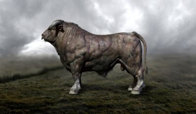 Bull Wallpapers Backgrounds