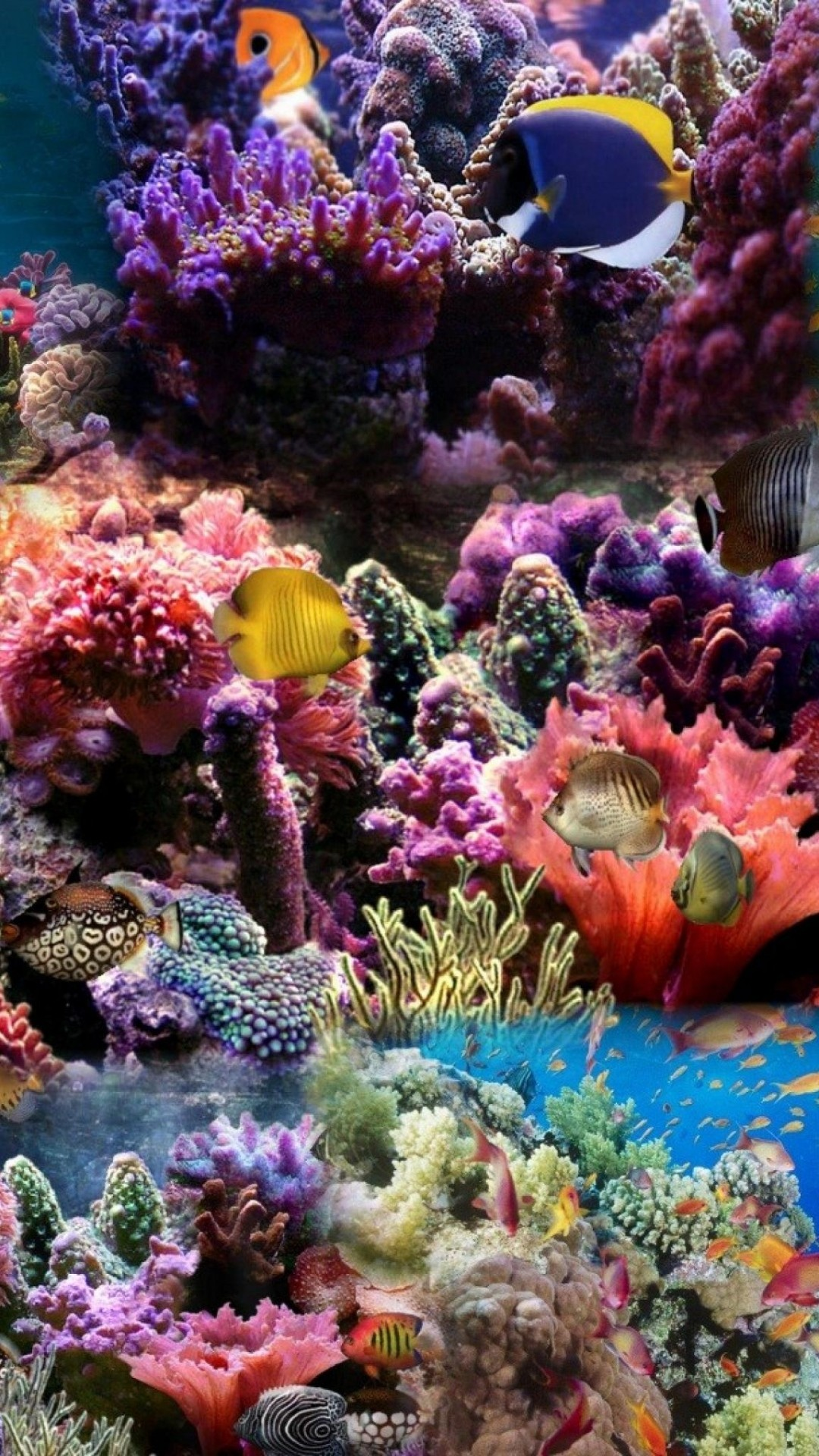 Tropical Ocean 3d Live Wallpaper Coral Reef Background 56 Pictures