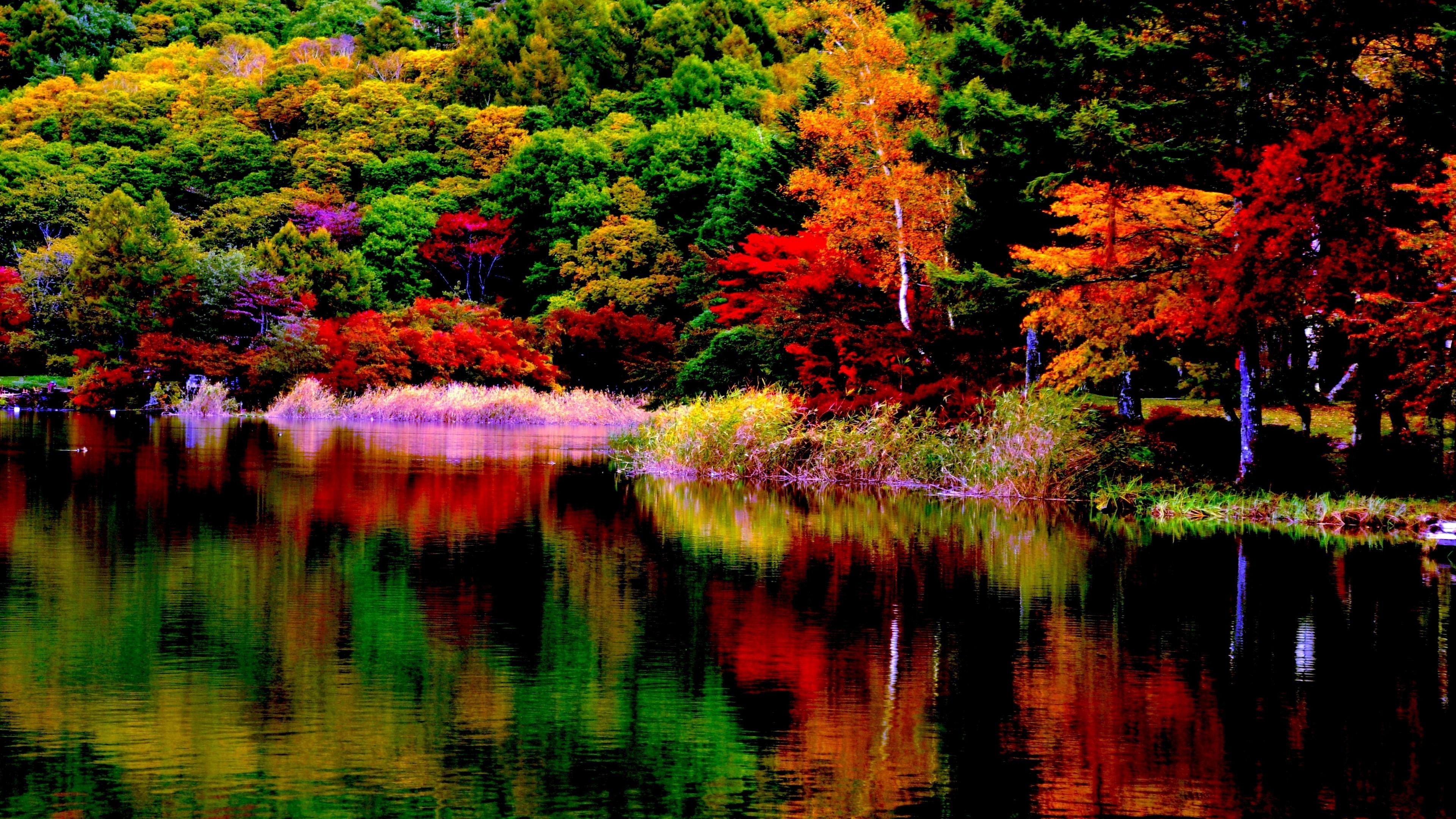 Free Fall Nature Wallpaper Fall Foliage Wallpaper 55 Pictures