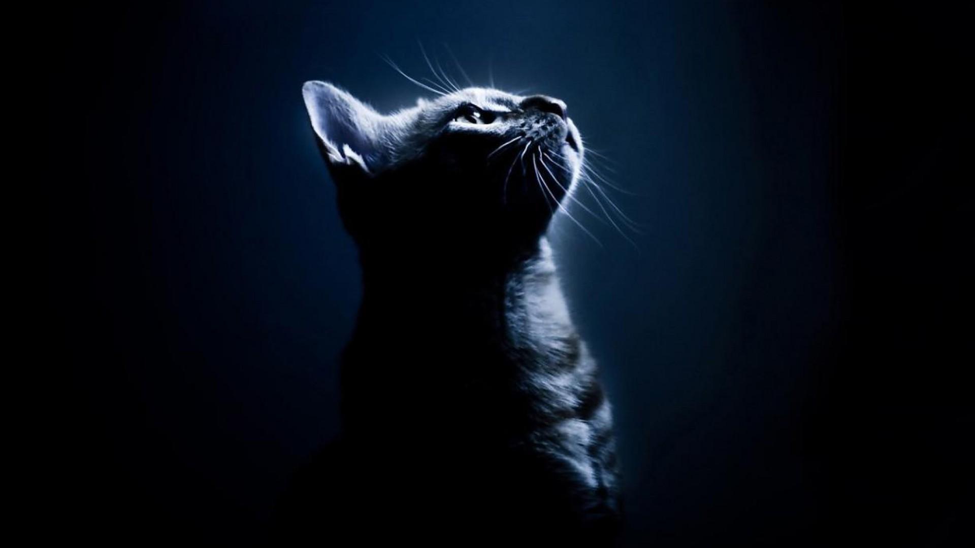 Cute Wallpapers Of Grumpy Cat Cat Desktop Background 77 Pictures