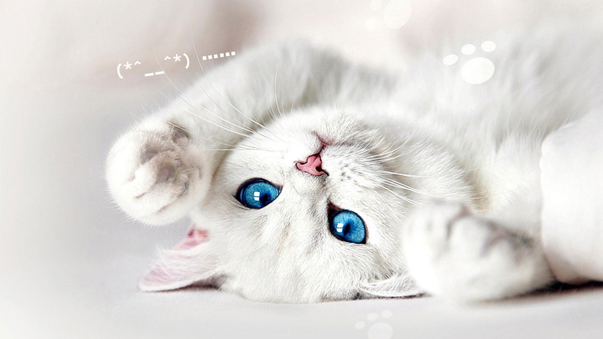 Cute Wallpapers Of Grumpy Cat Cat Wallpaper Desktop 68 Pictures