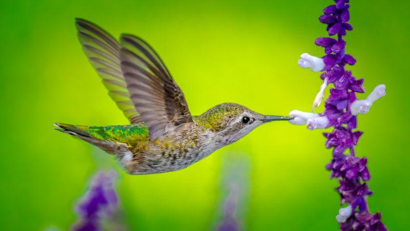 Abstract Animal Wallpaper Wallpaper Hummingbird Bird Flower 5k Animals 17838